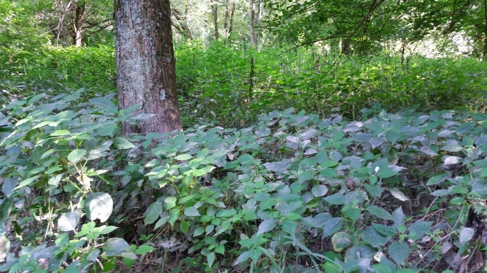 The silt is visible on the leaves of this underbrush.